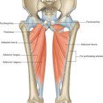 Pubic Bone Pain in Pregnancy